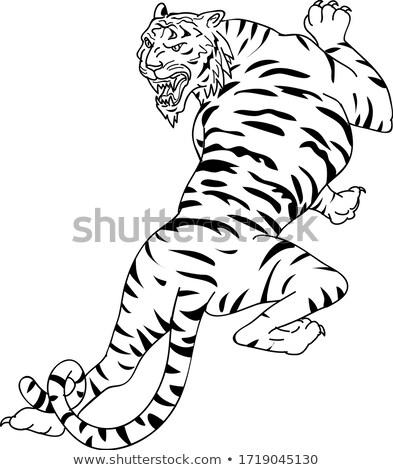 Bengalski Tygrys rysunek szkic stylu ilustracja Zdjęcia stock © patrimonio