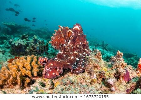 Ahtapot deniz Yunanistan balık hayat Stok fotoğraf © KonArt