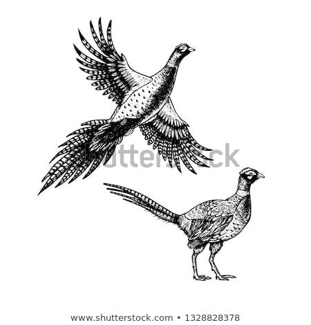 画像 頭 男性 ヨーロッパの 鳥 ストックフォト © naffarts