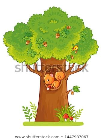écureuils arbre vecteur noir automne Photo stock © beaubelle