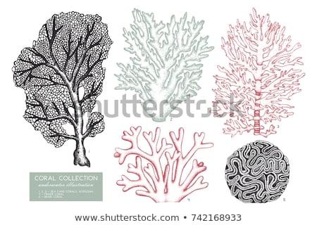 finger coral polyps Stock photo © photohome
