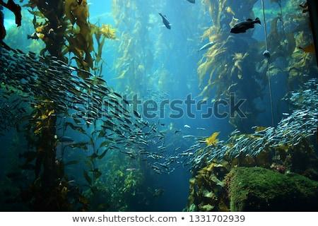 森林 · カリフォルニア · 水 · 魚 · 海 · 美 - ストックフォト © Laracca