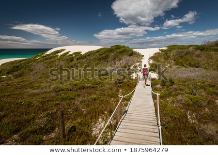 wooden walkway along ocean coast stock photo © feverpitch