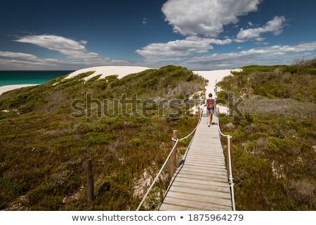 Wooden Walkway Along Ocean Coast Stock photo © feverpitch