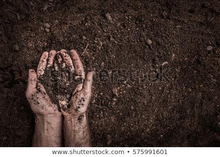 kéz · fekete · föld · kezek · tart · kert - stock fotó © smithore