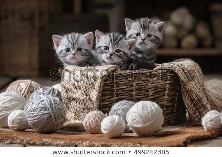 Kedi yavrusu sepet çok güzel genç içinde Stok fotoğraf © AlphaBaby