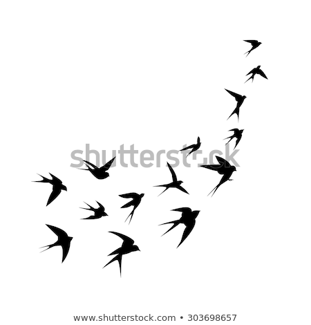 silhouette of swallow Stock photo © perysty