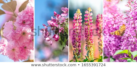 Collage of beautiful springtime scenes Stock photo © Julietphotography