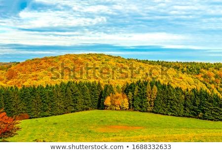 árvore floresta silvicultura trilha cair Foto stock © MiroNovak