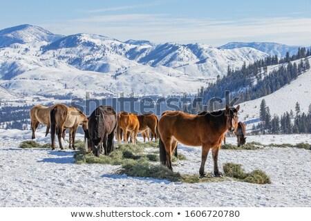 At yeme saman kar kapalı gözler Stok fotoğraf © rogerashford