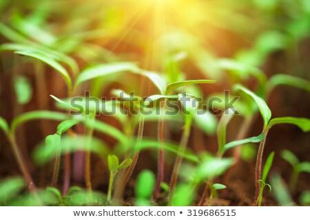 Palánták faiskola üvegház levelek növény törődés Stock fotó © wavebreak_media