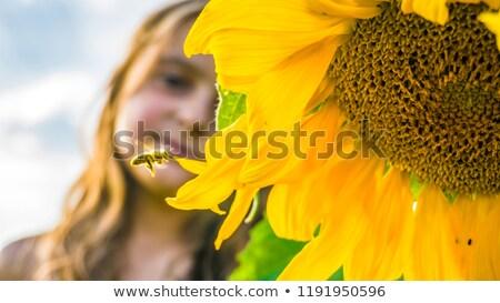 Bee · подсолнечника · желтый · природы · цветок - Сток-фото © lunamarina