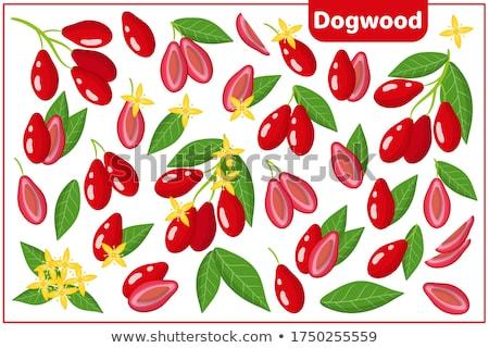 dogwood with leafs stock photo © masha