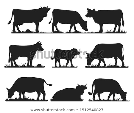 grazing cows on pasture Stock photo © chesterf