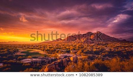 Arizona boom zonsondergang natuur reizen wolk Stockfoto © BVDC