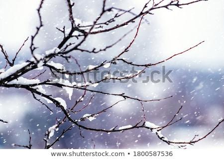 winter bare tree and snowfall Stock photo © Mikko