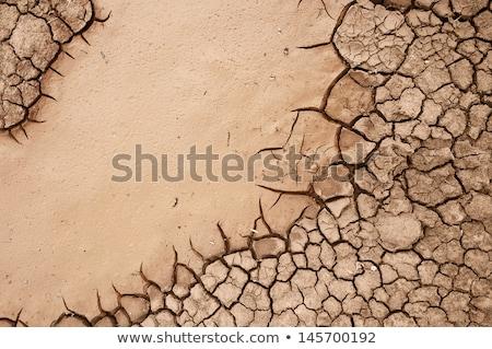 planta · secas · rachado · lama · água · folha - foto stock © meinzahn