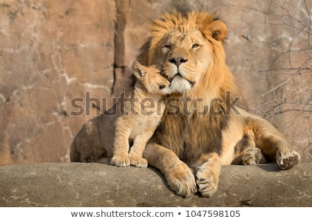 Portré oroszlán medvebocs természet nyár nap Stock fotó © OleksandrO