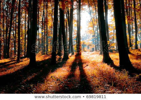 beautiful trees in indian summer colors Stock photo © meinzahn