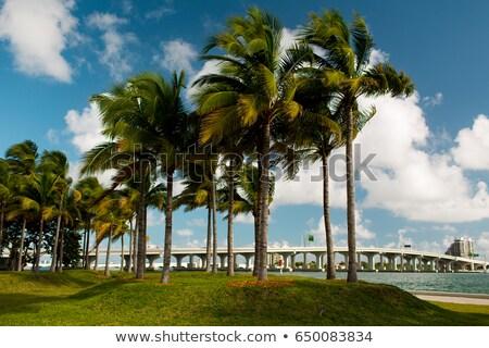 Miami · városkép · sziluett · kulcs · fa · város - stock fotó © meinzahn