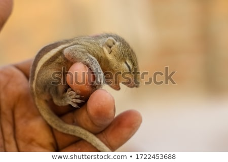 Etetés mókus vad eszik földimogyoró nyilvános Stock fotó © arenacreative