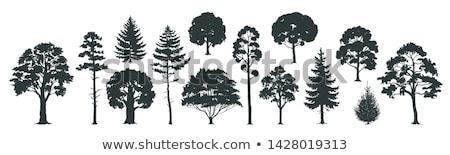 ツリー 鉛筆 スケッチ 木材 森林 ストックフォト © Yuran