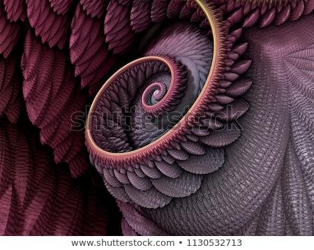 Conchas fractal colorido spiralis preto vermelho Foto stock © raduga21
