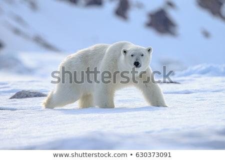 Jegesmedve áll jég áramlás sarki fények Stock fotó © Bigalbaloo