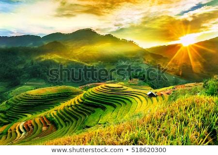 Arrozal Vietnã árvore grama montanha campo Foto stock © H2O