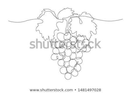 köteg · szőlőtőke · rajz · illusztráció · hasznos · designer - stock fotó © rastudio