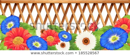 Colourfl flowers near the wooden fence Stock photo © bluering