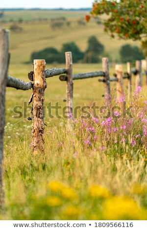 a fence with flowers stock photo © bluering