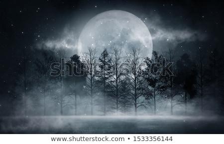 Hideg hajnal mező égbolt fa fa Stock fotó © pedrosala