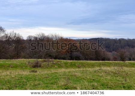 sombre · ciel · vert · domaine · orageux - photo stock © justinb