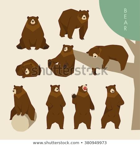 groot · beer · bruin · bont · illustratie · achtergrond - stockfoto © robuart