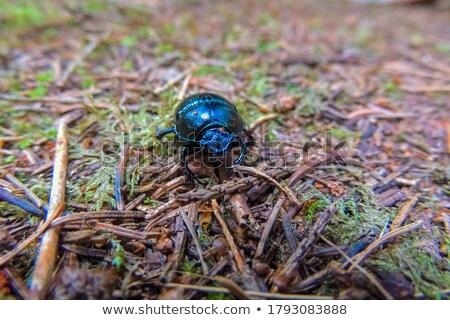 Kever insect zomer natuur icon cirkel Stockfoto © Olena