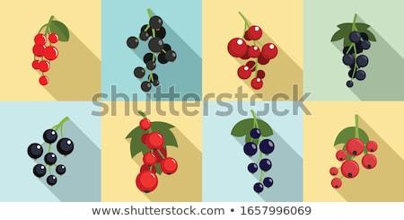 Ribiszke levél ikon vektor stílus grafikus Stock fotó © ahasoft