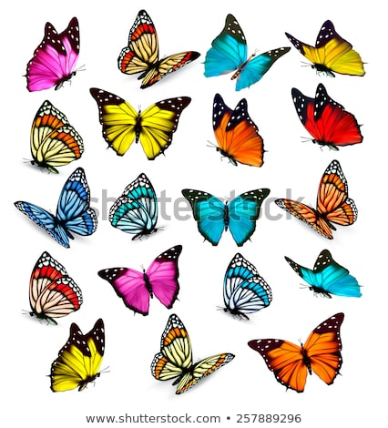 collection of colored butterflies isolated on white stock photo © rufous