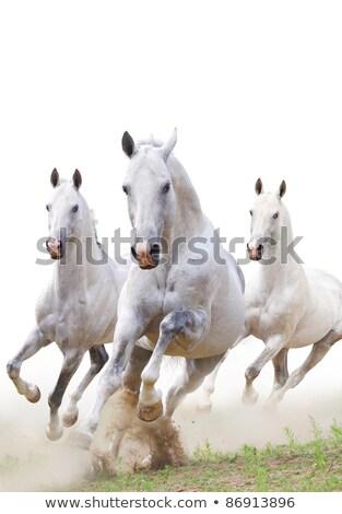 Csoport három lovak sétál kíváncsi séta Stock fotó © compuinfoto