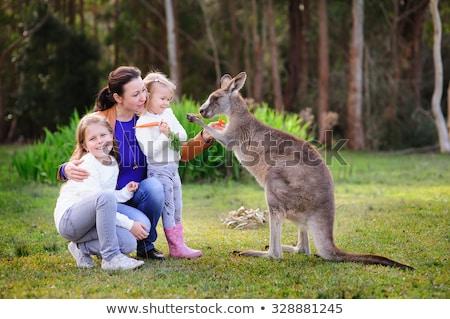 Kicsi kenguru szeretet rajz illusztráció Stock fotó © cthoman