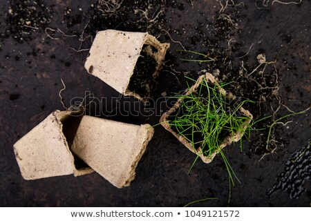 Peat pots with young seedlings, grass on a brown background.  Stock photo © Illia
