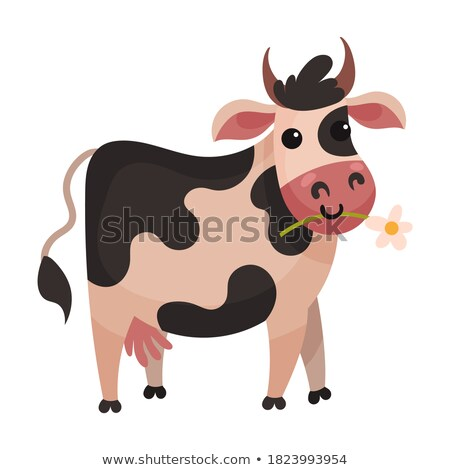 spotted cow chewing grass farm or ranch animal stock photo © robuart