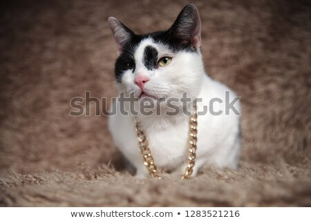 adorable grey cat wearing gold collar looks to side Stock photo © feedough