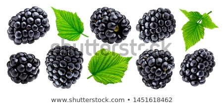 BlackBerry frescos bayas blanco placa naturaleza Foto stock © tycoon