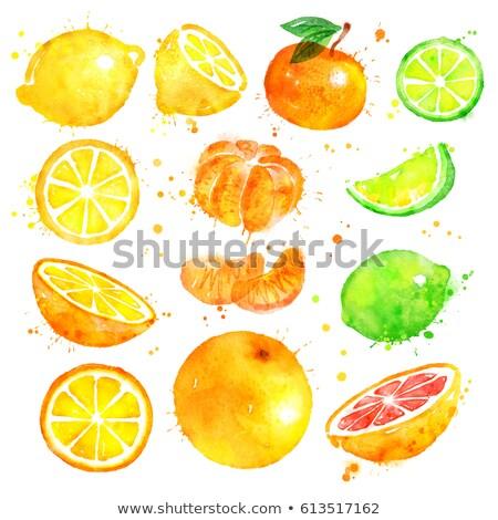 Watercolor orange, lemon, citrus, mandarin, grapefruit and lime Stock photo © ConceptCafe