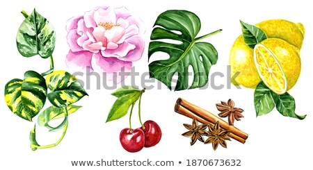 Watercolor cinnamon and cherry on white background Stock photo © ConceptCafe