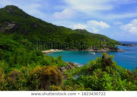 Scenico view isola Seychelles cocco alberi Foto d'archivio © AndreyPopov