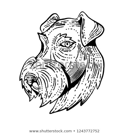 Airedale Terrier Head Etching Black and White Stock photo © patrimonio