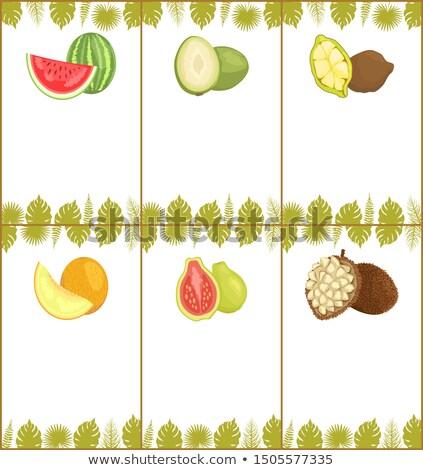 Anguria melone passione frutta vettore Foto d'archivio © robuart