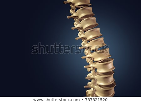 Human Spine Disk Anatomy Stock photo © Lightsource